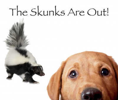 Skunk Spray On Your Dog removed with HBS (Hit By Skunk) Shampoo