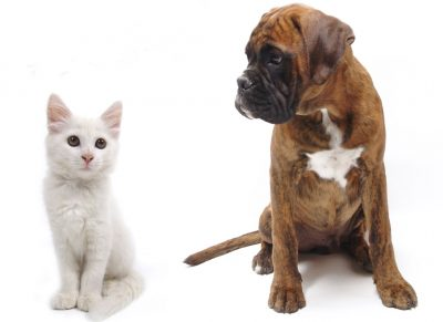 Spaying and neutering your pets at Plantation Pet Health Center (PPHC)