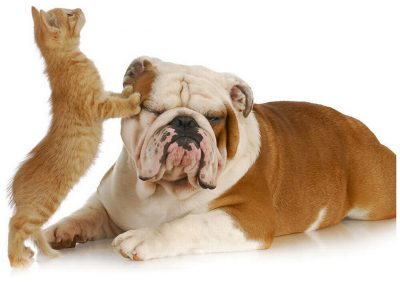 Treatment Diabetes in Dogs and Cats