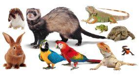 Exotic Pet Care Plantation Pet Health Center (PPHC)
