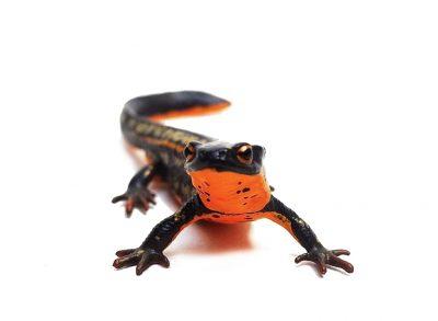 Exotic Pet Care companion animal