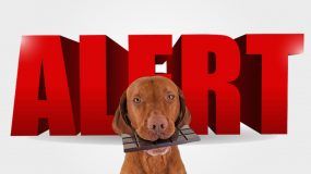 pet health warnings Chocolate Poisoning in Dogs