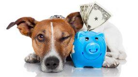 Pet Specials Promotions Discounts at Plantation Pet Health Center (PPHC)