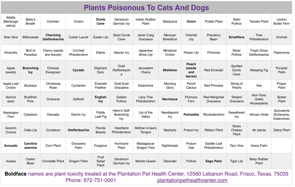 plants poisonous to cats and dogs. Black Bedroom Furniture Sets. Home Design Ideas
