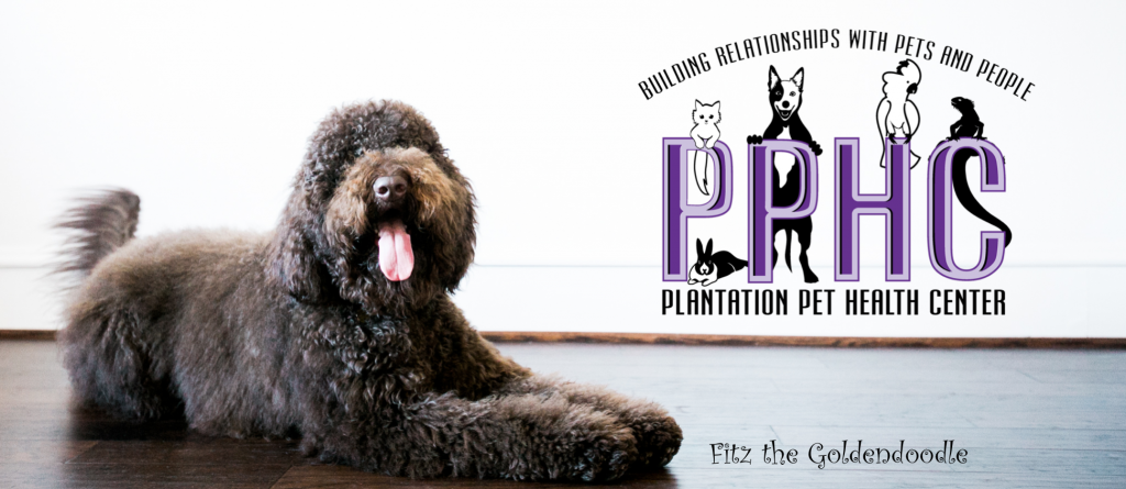 Pet Grooming FAQs from George E. Martin, Jr., DVM  Plantation Pet Health Center