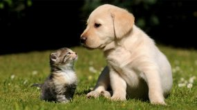 Spaying and neutering your pets at Plantation Pet Health Center (PPHC) Frisco Plano