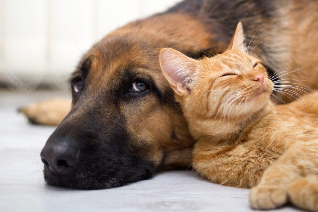 Pet Boarding Services Frisco Allen and Plano