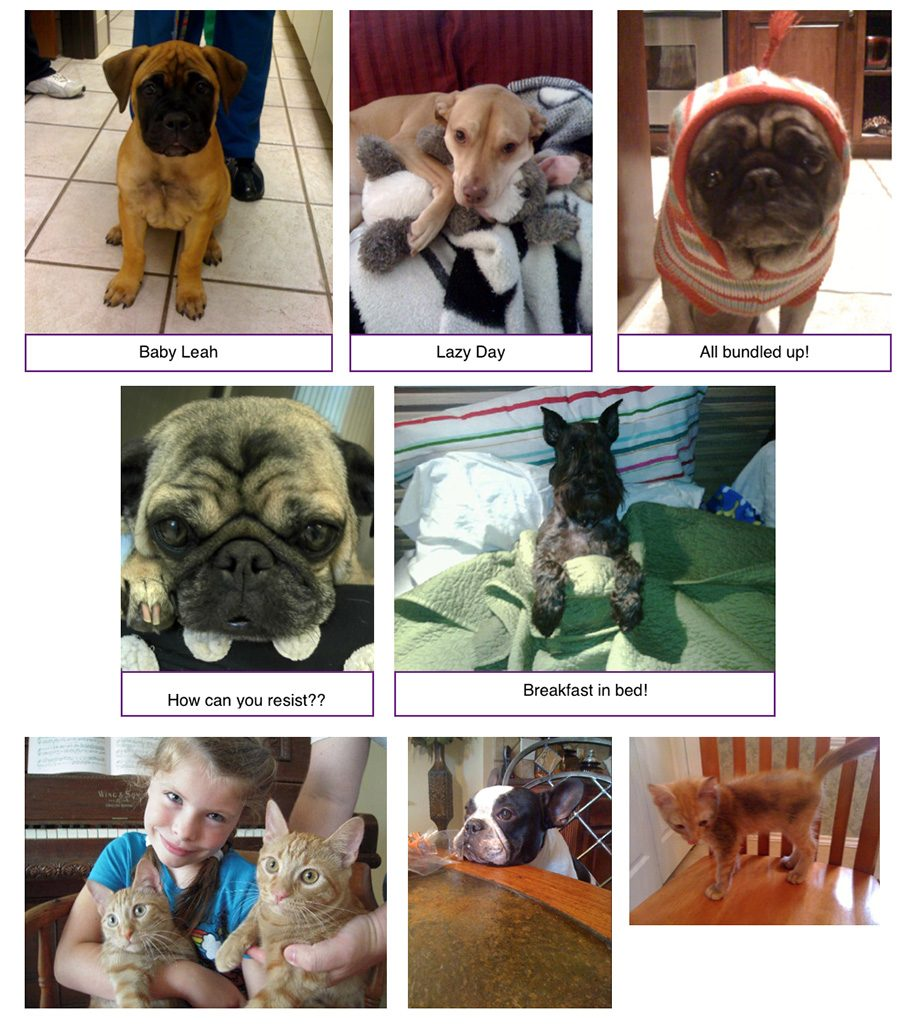 image gallery 1 Plantation Pet Health Center (PPHC)