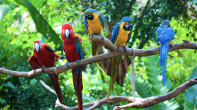 Exotic animal companions birds